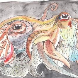 Cuttlefish Lovins'