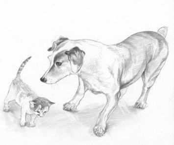 Jack Russell & Kitten