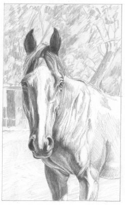 """Norma's Horse"", graphite on paper,"