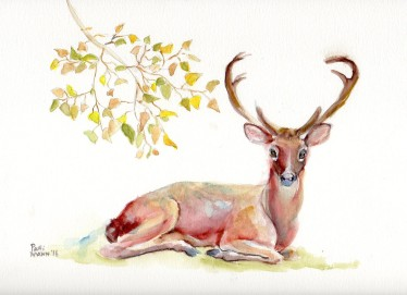 "©Patti Mann ""Deer"", watercolor on 9x12"" paper, $25. Free non-expedited domestic shipping!"