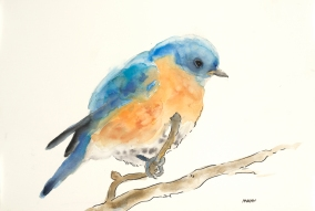"""Blue Bird"", watercolor, graphite, pen & ink on 18x12"" paper. $65, non-expedited domestic shipping included"