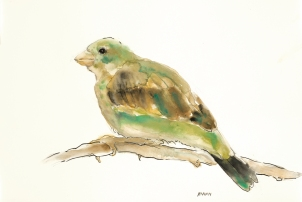 """""""Green Bird"""", watercolor, graphite, pen & ink on 18x12"""" paper. $65, non-expedited domestic shipping included"""