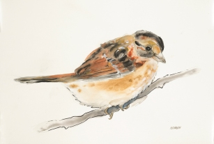 """""""Brown Bird"""", watercolor, graphite, pen & ink on 18x12"""" paper. $65, non-expedited domestic shipping included"""