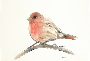 """Blush Bird"", watercolor, graphite, pen & ink on 18x12"" paper. $65, non-expedited domestic shipping included"